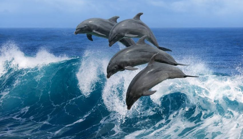 delfin, animales viviparos