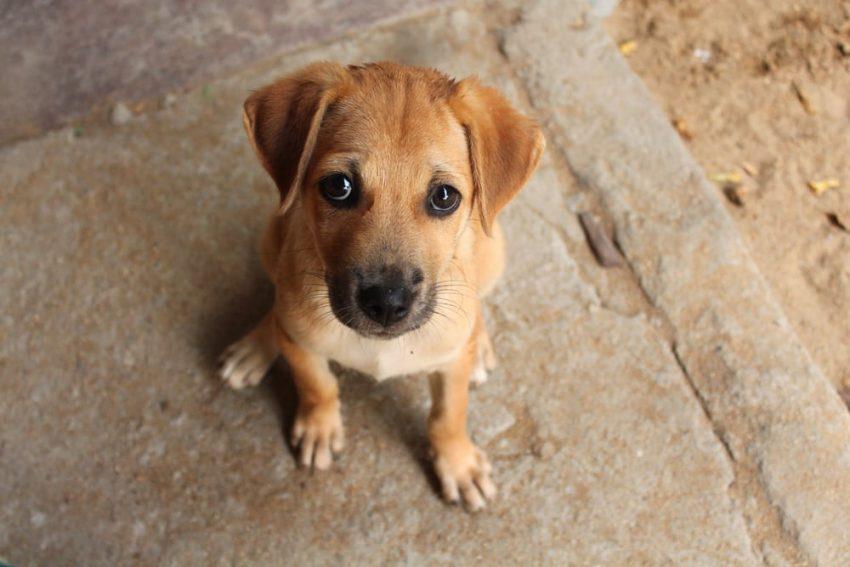 animales domesticos - perro