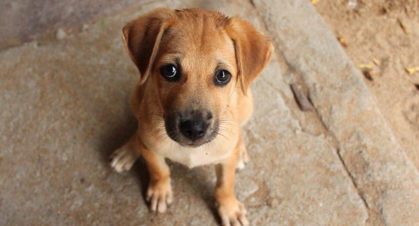 perro - homeotermo