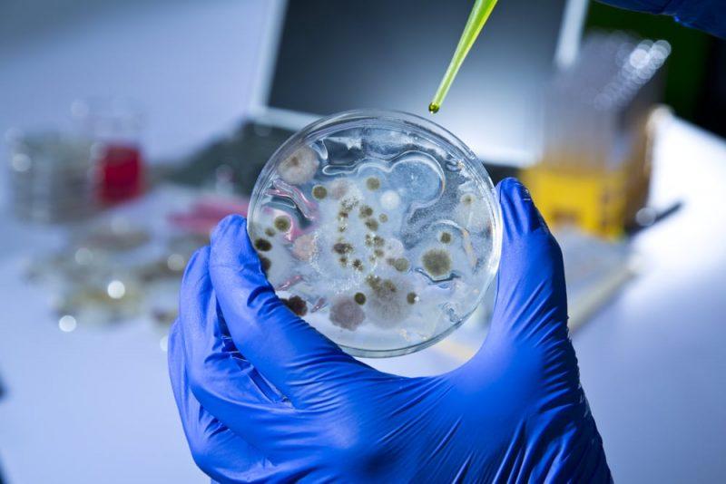bacterias en laboratorio