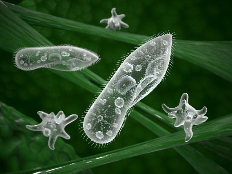 organismos microscopicos
