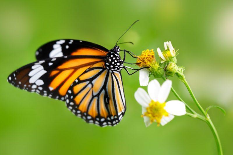 mariposa - animales invertebrados