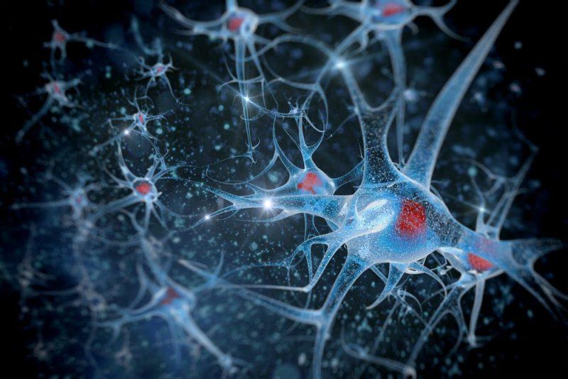 neurotransmisores activos en el cerebro