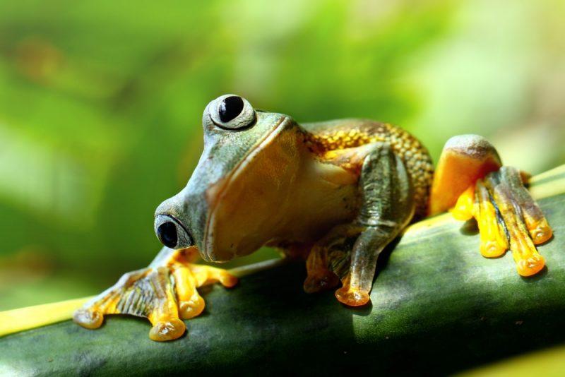Sapo Rana - animales anfibios