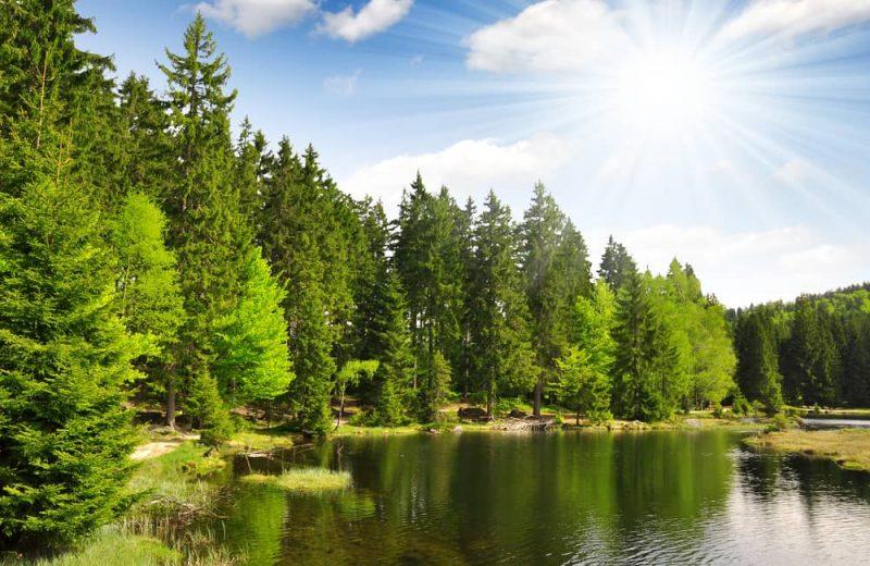 bosque - sistema abierto