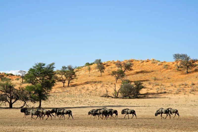 desierto de kalahari - africa