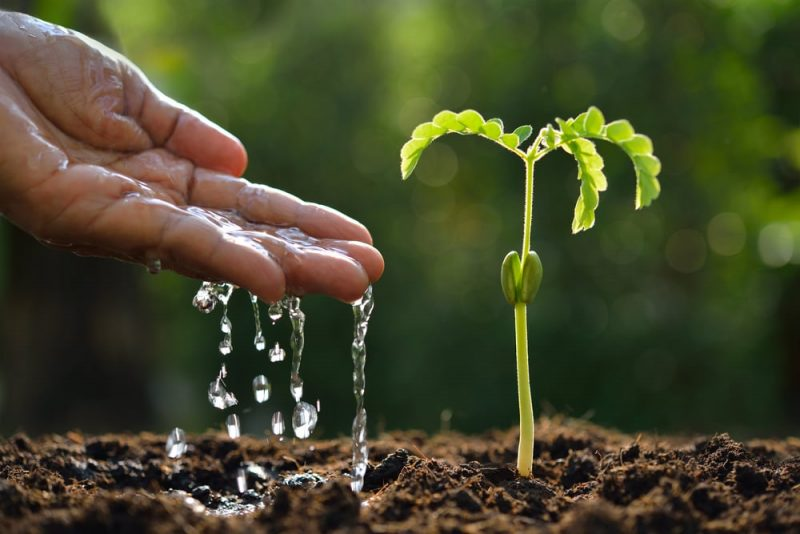 planta - reino plantae