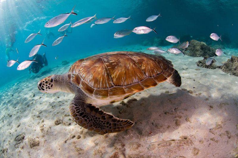 ecosistema acuático océano