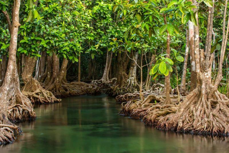 bioma de manglares - paisaje