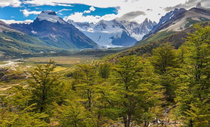 bosques - ecosistema terrestre