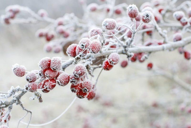 escarcha en frutas - cristalizacion