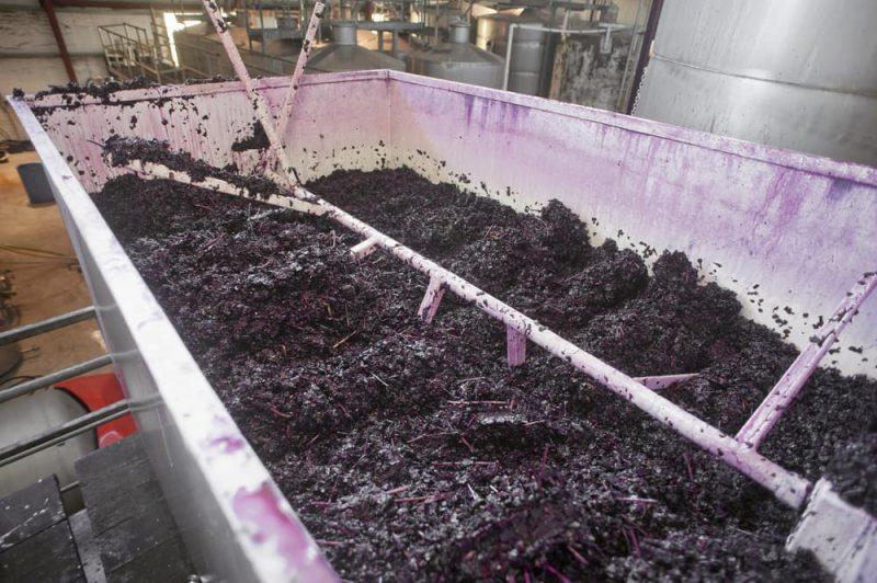Fermentación de las uvas. Vino