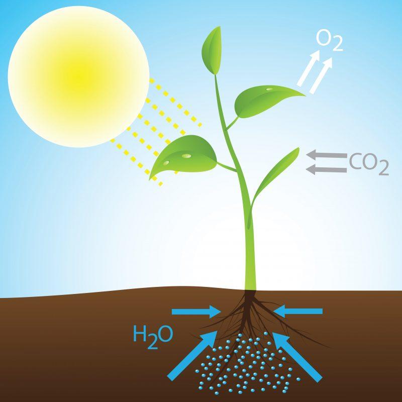 fotosintesis - ilustración