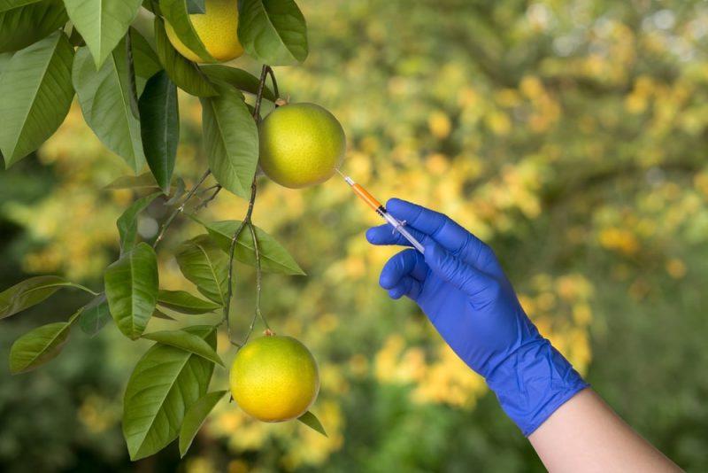 frutas: modificacion genetica