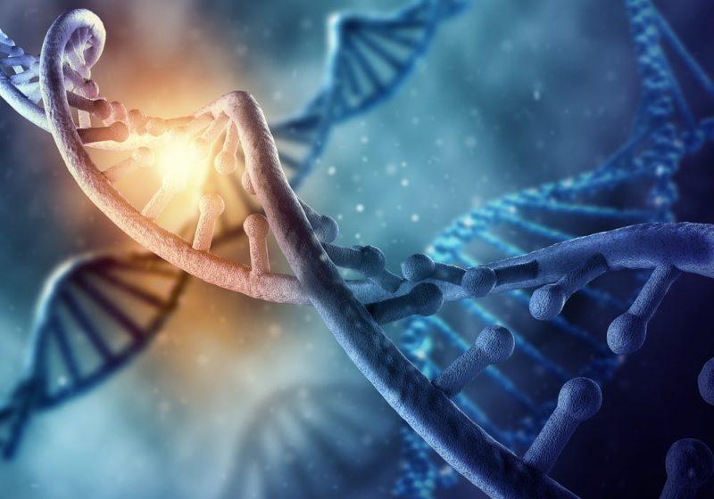 genes seleccion natural