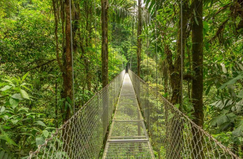 monteverde - selva