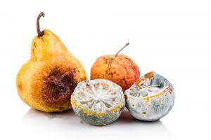 organismos descomponedores- frutas
