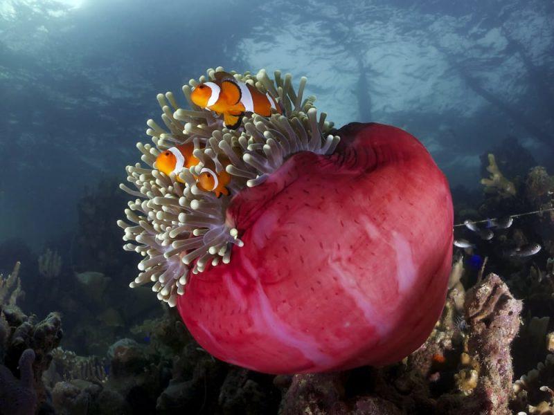 arrecifes coralinos - ecosistema