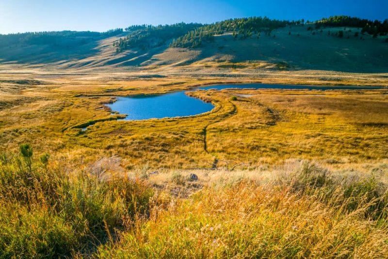 Pradera - paisaje y bioma