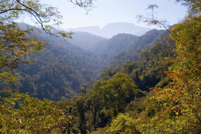 yungas - selva