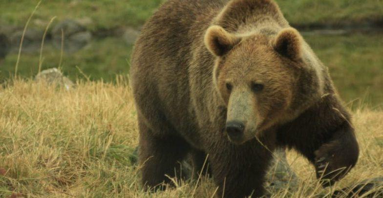 osos - omnivoros