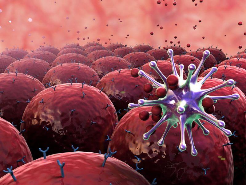 sistema inmune humano - atacando virus