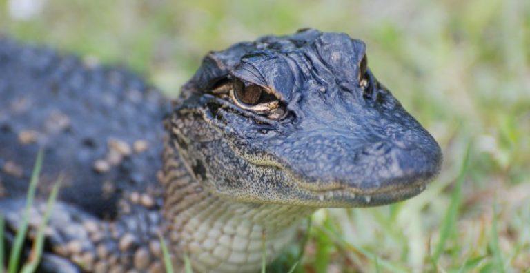 reptiles - animales que reptan