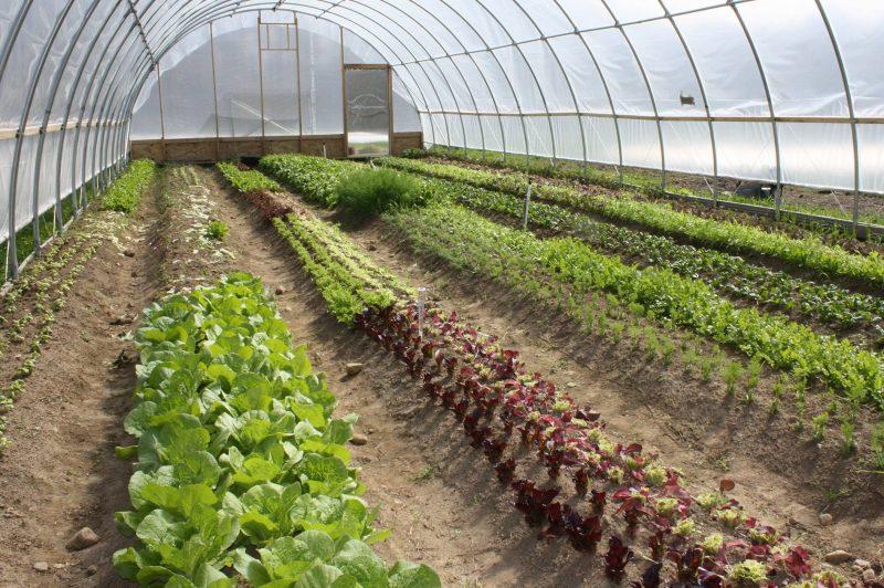 horticultura cultivos