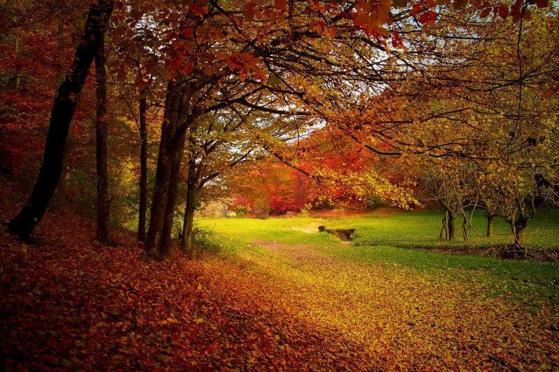 otonio - hojas secas - basura