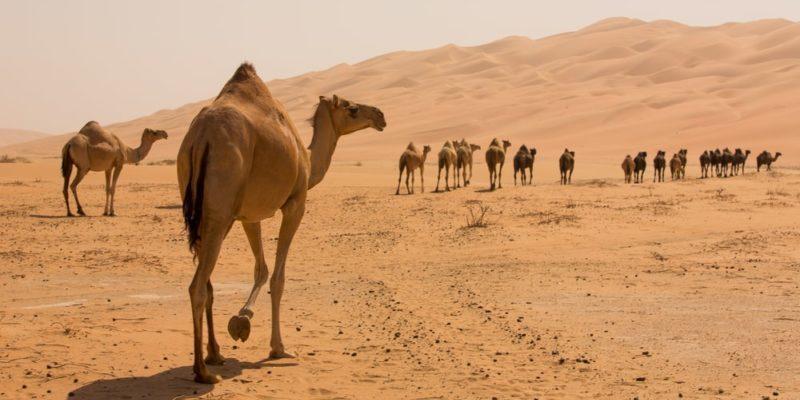 Fauna desierto